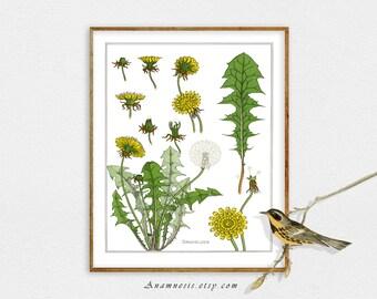 DANDELION COLLAGE SHEET Print - digital image download - printable plant illustration - framable art - image transfer to totes & pillows