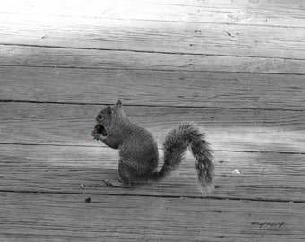 Squirrel / Squirrel With A Nut / Free US Shipping / Jupiter, Fl.