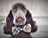 Plaid Burly wood bow tie Dog Bow Tie, bow attached to dog collar,  Dog Bow tie, Dog Lovers, dog accessory, Christmas Gift, Dog birthday gift