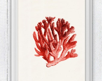 Red coral no.06 - Antique sealife Illustration - sea life print- Marine  sea life illustration A4 print SPC063