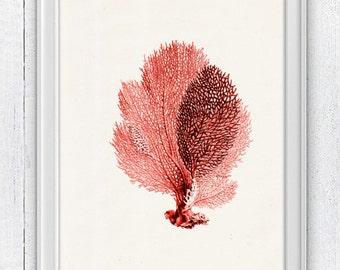 Sea fan coral no.02 - sea life print-Marine  sea life illustration A4 print SPC059