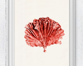 Sea fan coral no.01 - Antique sealife Illustration - sea life print-Marine  sea life illustration A4 print SPC056