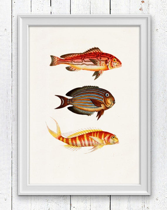 Vintage  fishes - Poster print  , Sea fish collage- sea life print-multicolor fishes SPA017