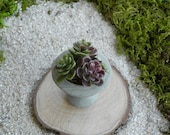 Fairy Garden Accessories - Urn miniature with stake and artificial succulents
