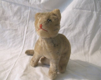 cat with war injury