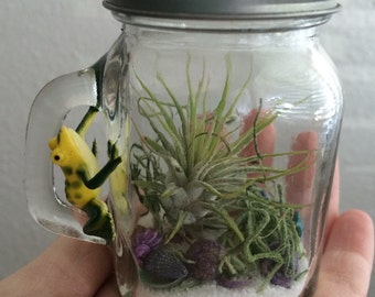 Fun-Sized Mini Mason Jar Terrarium