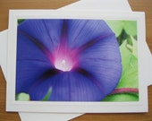 Photo Greeting Card, Floral Cards, Purple Morning Glories, Morning Glory ,Photo Notecards, Thinking of You Card, Purple, Nature Art, Cards