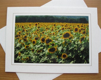 Photo Blank Greeting Card, Yellow, Yellow Flower, Sunflower, Sunflower Photo, Field, CT, Gifts under 5, Sunflower Field, Griswold, CT, Sun
