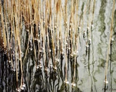 Reed - Fine Art Photography, Download, Nature