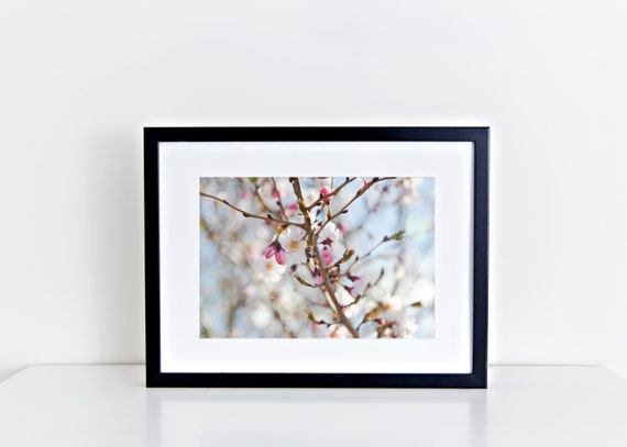 Cherry Blossoms in Bloom // pink cherry blossoms, flower photography, floral wall art, feminine, nursery art, nature photography