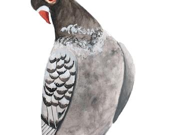 Paloma (Pigeon) #1
