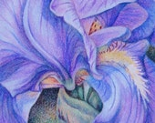 Original ACEO by Michele Bolling--Colored Pencil--Iris