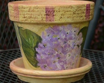 Hydrangea - 6 inch pot