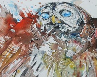 Blue Eyed Owl