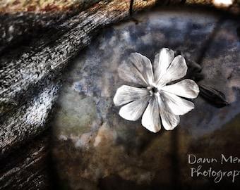 Fine Art Flower Photography, White Flower Wall Print, Floral Fine Art Photo Decor Prints, Nature Photo, Fine Art Photograph