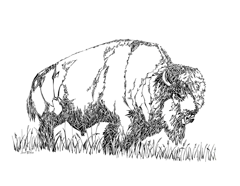 Line Drawings Of Woodland Animals : Bison drawing buffalo illustration wild animals