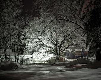 Macabre Winter Tree Landscape Fine Art photography Print black and white 5x7, 8x10