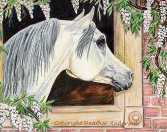 "8x10 giclee print, ""Flora's Window"",   Arabian mare artwork, hand drawn, horse art, Heather Anderson"