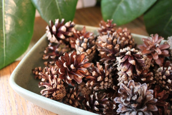 100 small scotch pine cones pine cone crafts rustic decor for Small pine cone crafts