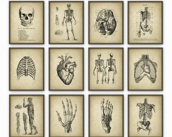 Human Anatomy Antique Art Print Set of 12 - Vintage Anatomy Home Decor - Antique Book Plate - Medical Student Gift Idea Picture Set of 12