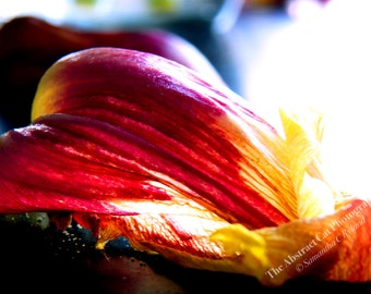 Flower Petal Photography, Floral Wall Art, 4x6, 5x7, 8x10, 11x14