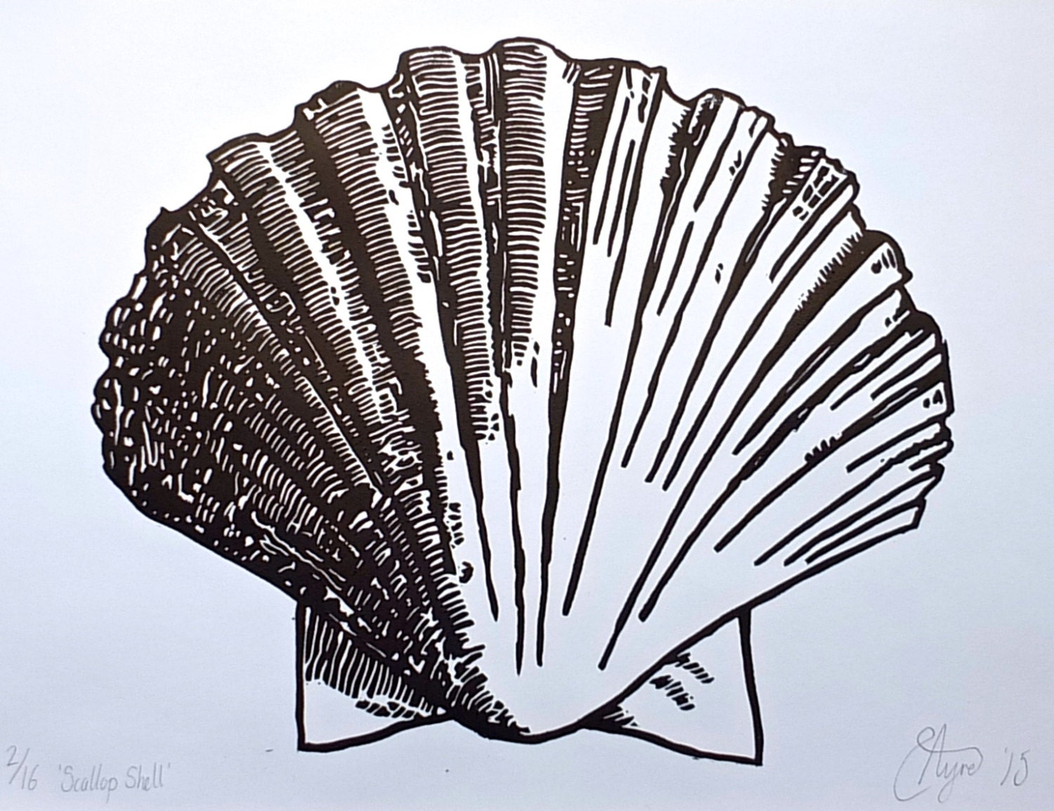 Line Drawing Natural Forms : Original scallop shell lino print art limited by
