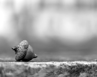 Nature Photography Black and White Art Nature Print Black and White Print Acorn Print Rustic Home Decor Fall Photography