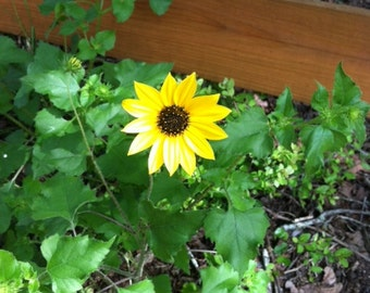 Cistern Texas Wild Flowers
