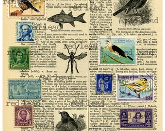 "Digital Bird Collage Sheet - 8-1/2"" x 11"" - Bird 34"