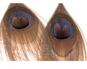 Tan Peacock Feather Earrings Great Gift