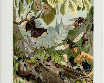 1890 Antique INSECT print , a fine chromolithograph of beetle, lady bug, butterfly, wasp eating a bird, 122 years old
