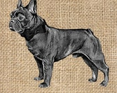 French Bulldog with Bow 300 dpi Digital Image Download Transfer For T Shirts Totes Napkins 022 Personal and Commercial Use