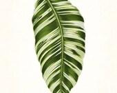 Vintage Botanical Tropical Leaf Series No. 1 - Giclee Art Print - Nautical Art - Beach Decor - Coastal Decor - Canvas Art - Botanical Print