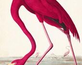 Vintage Audubon Pink Flamingo Bird Print - Giclee Canvas Art Print, Poster - Home Decor - Wall Hanging - Coastal Art - Audubon Bird Prints