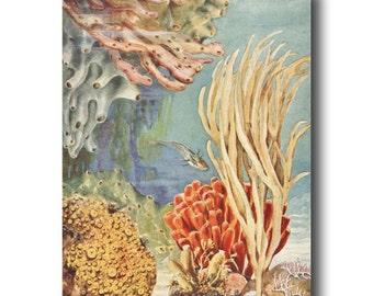 Seaweed Wall Art, 1930s Beach House Decor, Vintage Tropical Fish Print No. 324