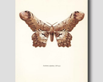 "Faux Bois Print, Butterfly Art (Monochrome Wall Art, Golden Brown Room Decor) Vintage Butterfly Print --- ""Silk Moth"" No. 56-2"