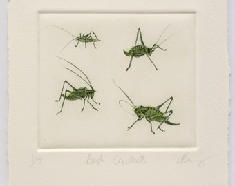 Bush Cricket print. Fine art drypoint. Grasshopper