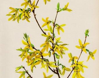 Yellow Flower Wall Art yellow flower art | etsy