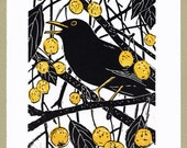 Blackbird Print - 'Hidden in the Crab Apples' - Original limited edition hand cut linocut print.