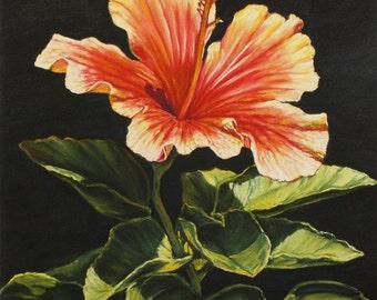 Hibiscus Giclee Fine Art Print