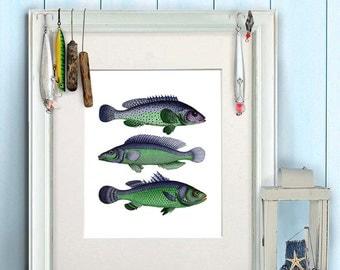 Fish art print - Blue/Green Fantasy Fish - fish print fishing gift fishermans gift fish wall art fish Gifts for Men birthday gift for dad
