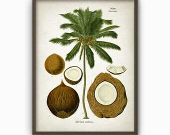 Coconut Kitchen Wall Art Poster - Botanical Wall Art Print (AB3)