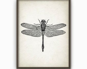 Dragonfly Wall Art Poster - Dragon Fly Home Decor - Giclee Insect Art Print (AB16)