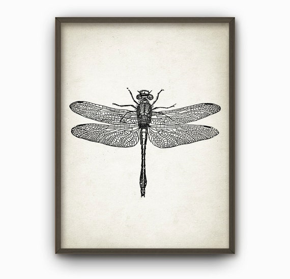 Dragonfly Wall Art Poster Dragon Fly Home Decor Giclee