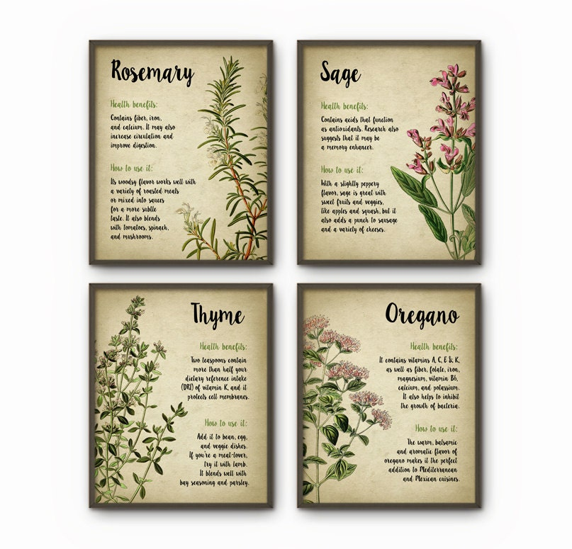 Herbs Kitchen Wall Art Print Set Of 4 Oregano Rosemary Sage