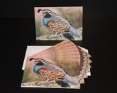Cards - Colorful Quail  - Pack of 8 with Envelopes, Story Insert, and Plastic Sleeve