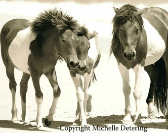 Wild Horses in Sepia- Horse Family, Horse Photography, Wild Horse Art, Horse Decor, Assateague Horses, Sepia Horses, Wild Horse Photography