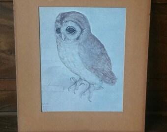 Vintage Owl Print, The Little Owl Matted Art Work Albrecht Dürer