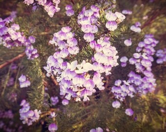 """Purple Flower Photography, Purple Wall Art, Large Wall Print, Floral Picture for Living Room - """"Secret Garden"""""""