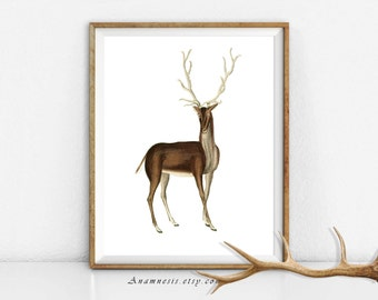 BUCK DEER with ANTLERS - digital download - printable retooled antique illustration - image transfer - totes, pillows, prints, clothes